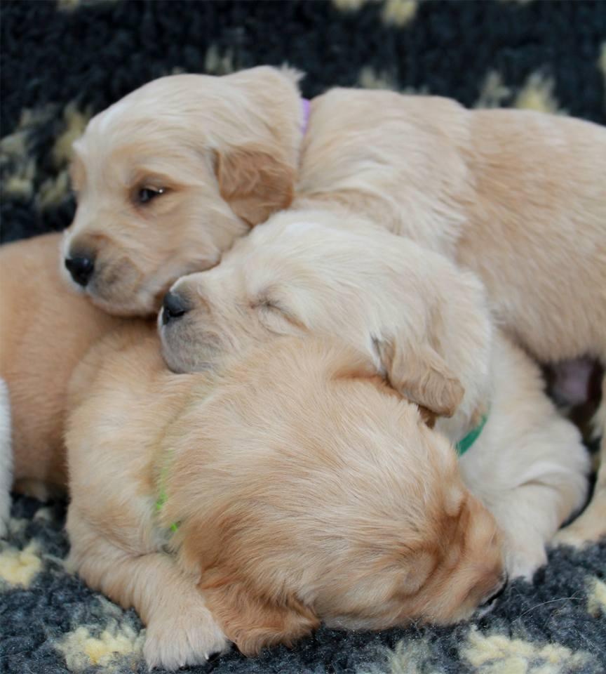 puppypurples