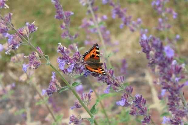 riverside butterfly